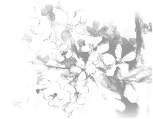 Blume TCM Tuina